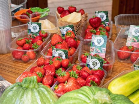 Voedselbos, I Love Texel, justinsinner.nl, juli 2021 (2)